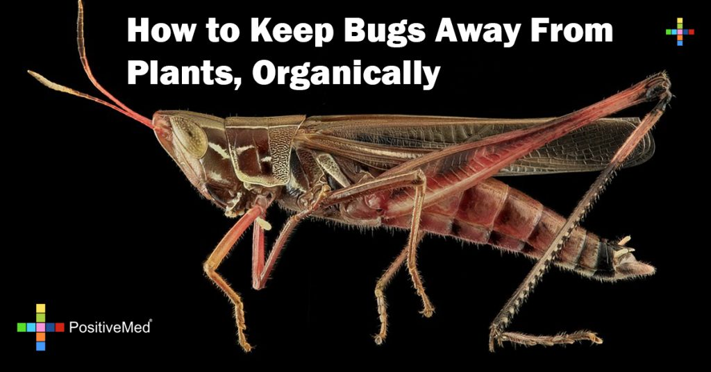 How to Keep Bugs Away From Plants, Organically