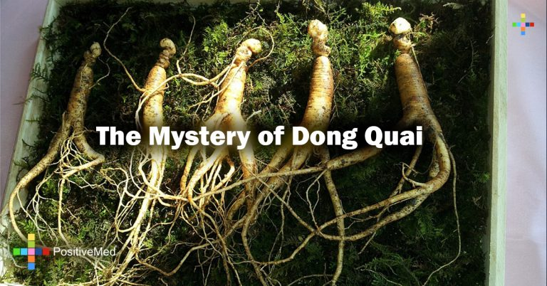 The Mystery of Dong Quai