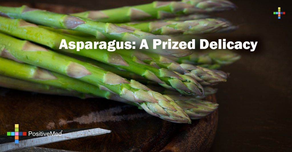 Asparagus: A Prized Delicacy