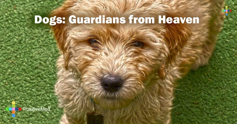 Dogs: Guardians from Heaven