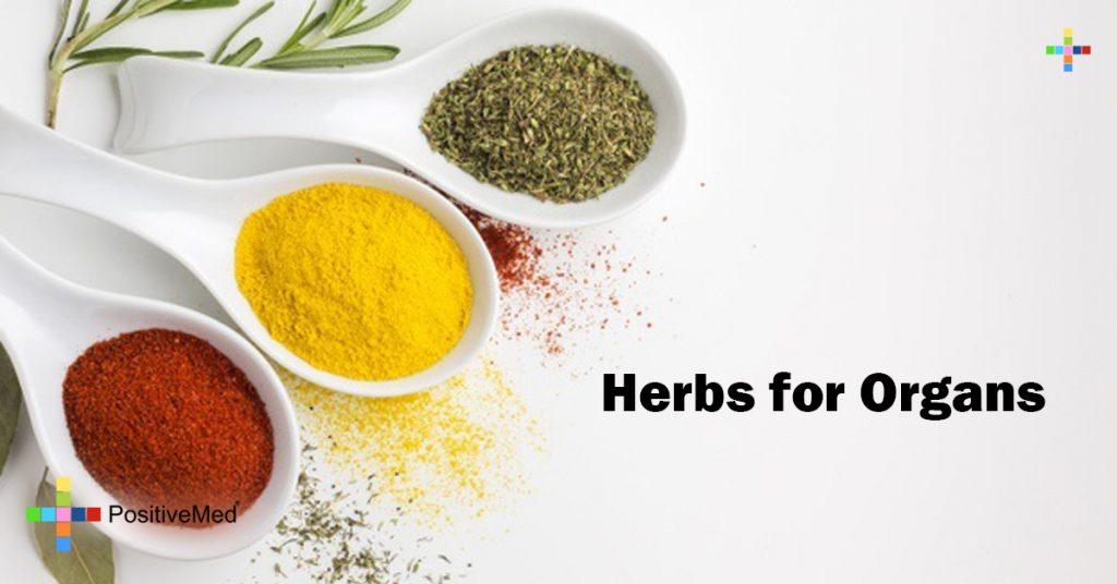 Herbs for Organs