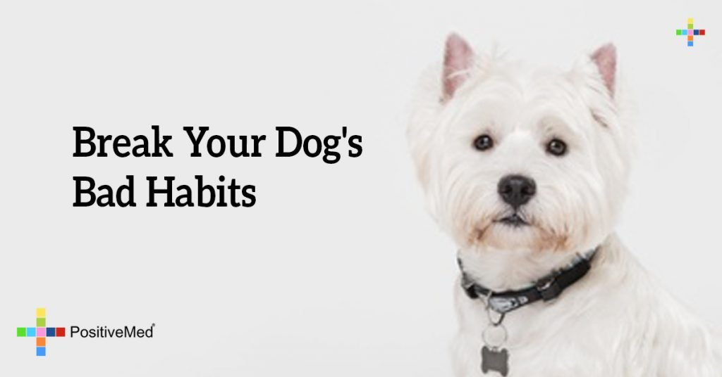 Break Your Dog's Bad Habits