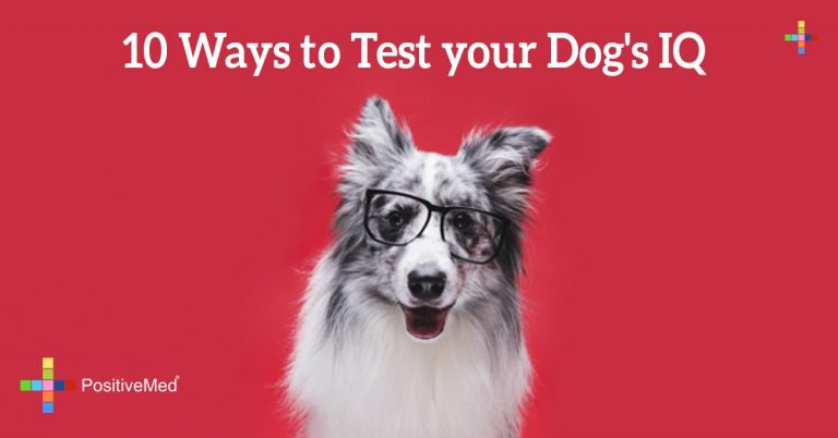 10 Ways to Test your Dog's IQ