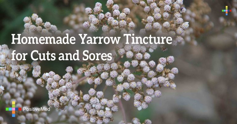 Homemade Yarrow Tincture for Cuts and Sores