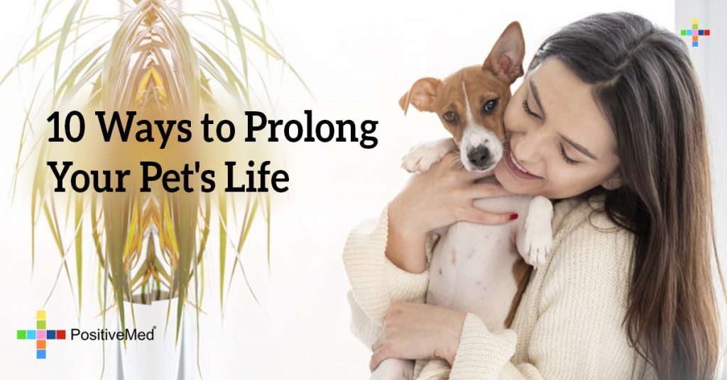 10 Ways to Prolong Your Pet's Life
