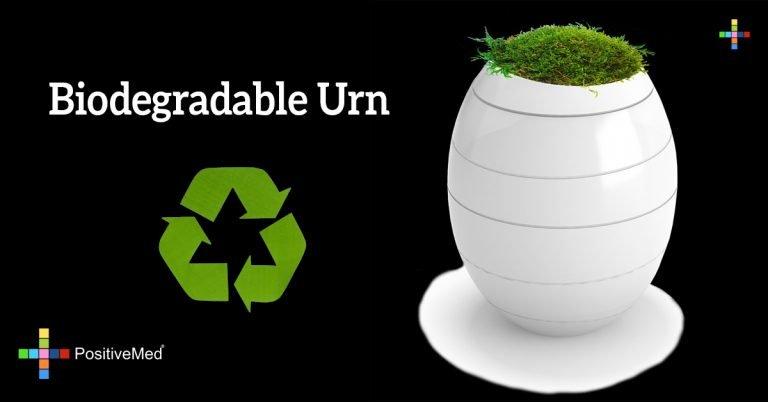 Biodegradable Urn