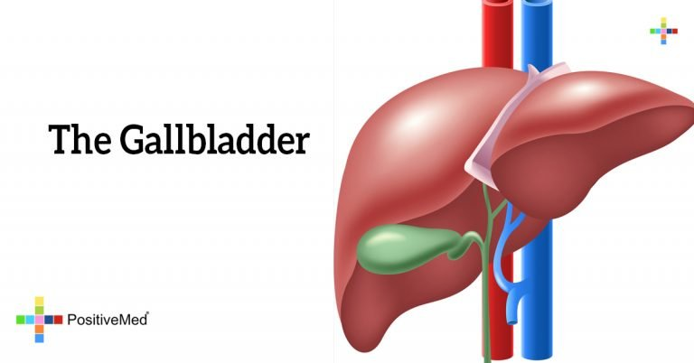 The Gallbladder
