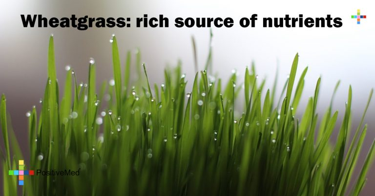 Wheatgrass: rich source of nutrients