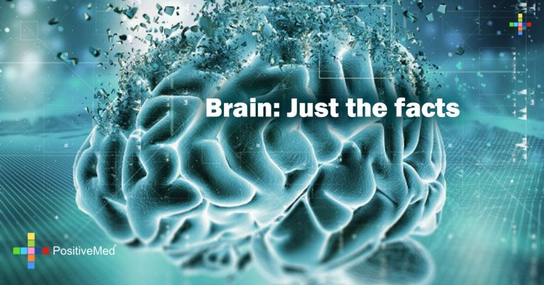 Brain: Just the facts