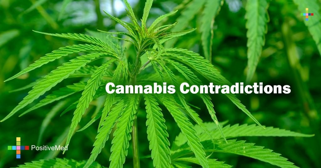 Cannabis Contradictions