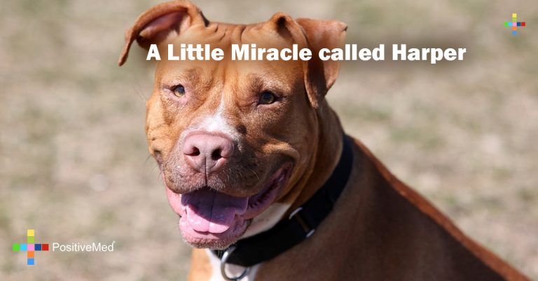 A Little Miracle called Harper