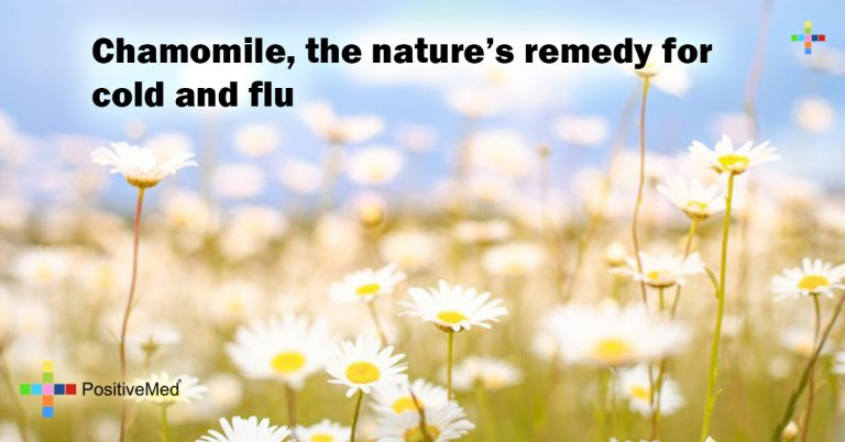 Chamomile, the nature's remedy for cold and flu