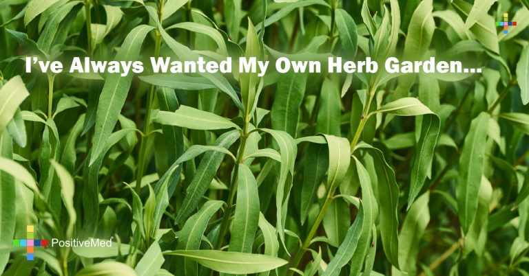 I've Always Wanted My Own Herb Garden…