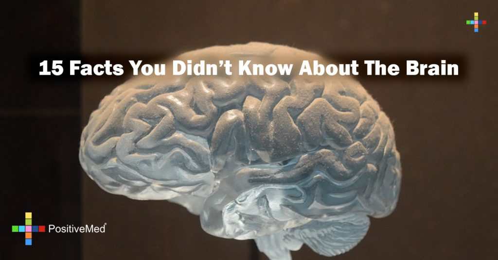 15 Facts You Didn't Know About The Brain