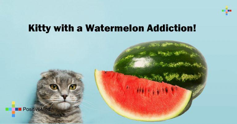 Kitty with a Watermelon Addiction!