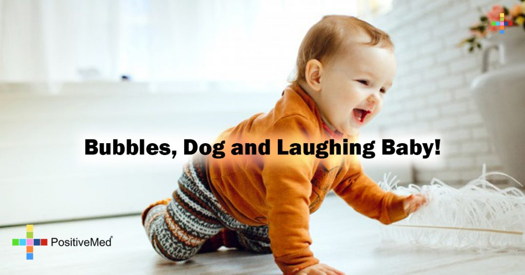 Bubbles, Dog and Laughing Baby!