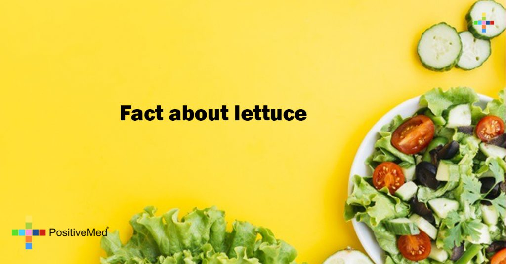 Fact about lettuce