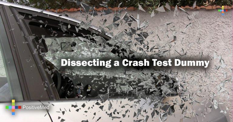 Dissecting a Crash Test Dummy