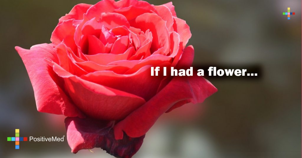 If I had a flower...