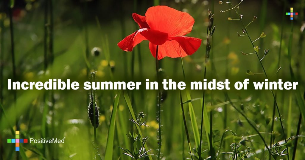 Incredible summer in the midst of winter