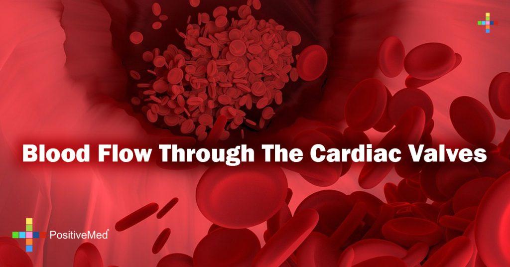 Blood flow through the cardiac valves