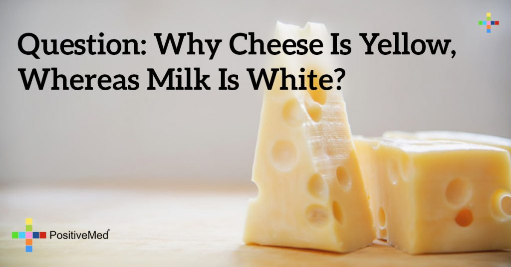 Question: Why Cheese is yellow, whereas milk is white?