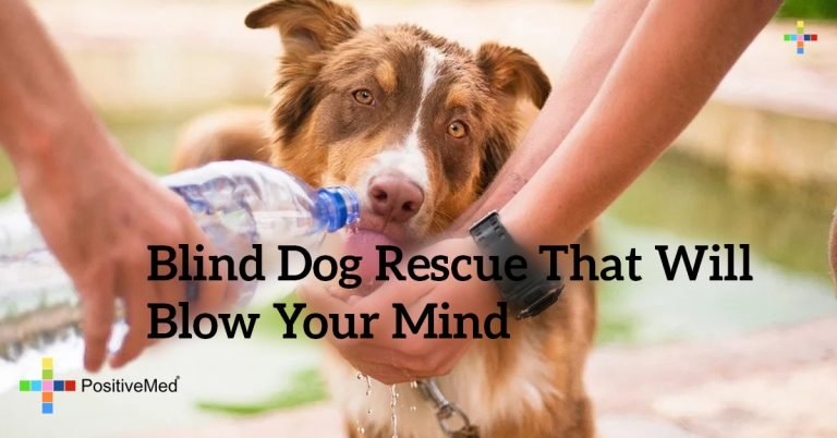 Blind Dog Rescue That Will Blow Your Mind