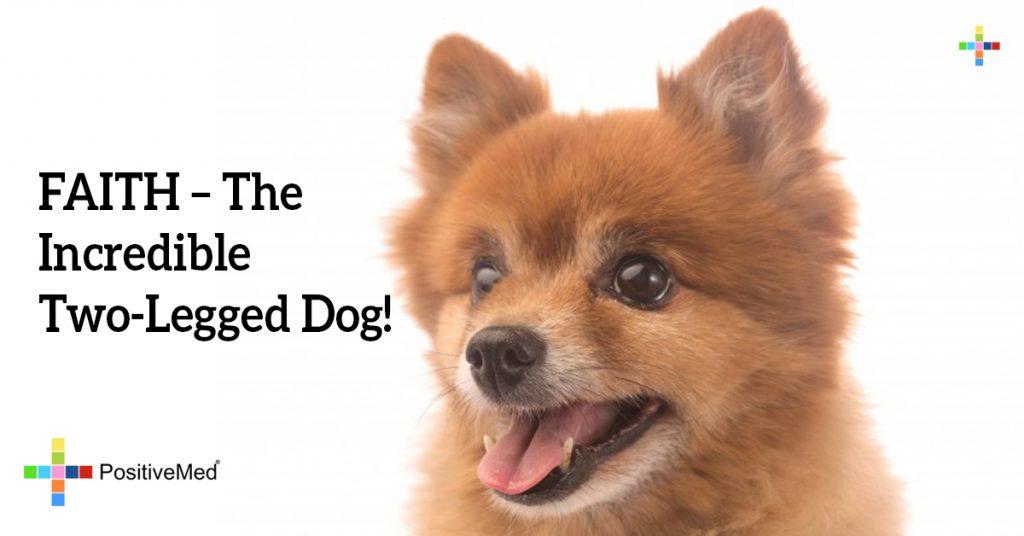 FAITH - The Incredible Two-Legged Dog!