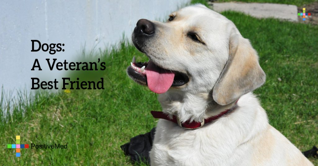 Dogs: A Veteran's Best Friend